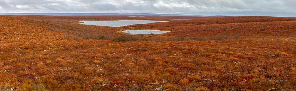 NWT Tundra Landscape - Connecting the North